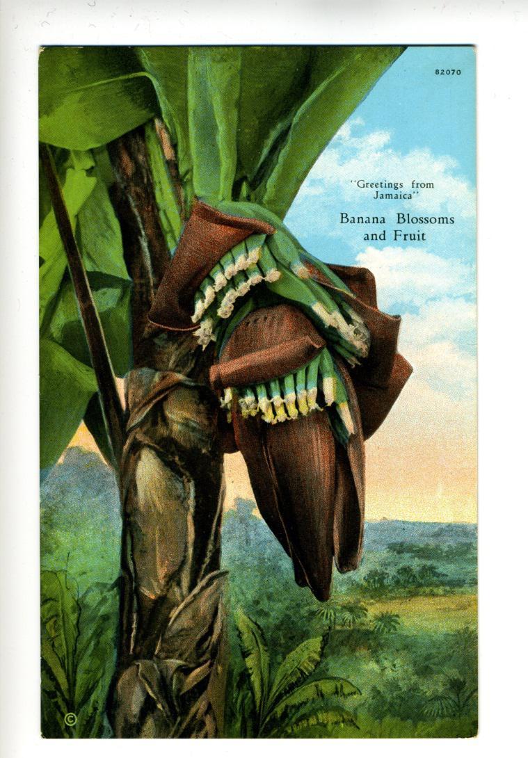 Claude McKay and Jamaican Tourism-image-2