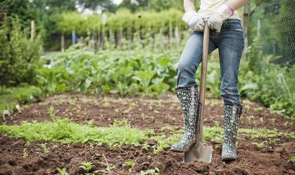 gardening-shoes