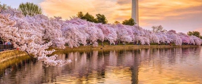 national-cherry-blossom-festival-top